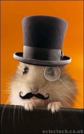 posh-hamster.jpg