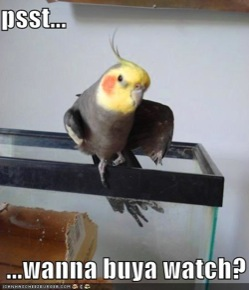 scaledfunny-pictures-sleazy-bird-asks-if-you-would-like-to-buy-a-watch