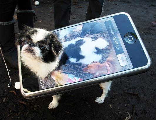3-dog-costume