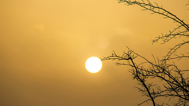Sun against cloudy backdrop with tree branches in foreground.