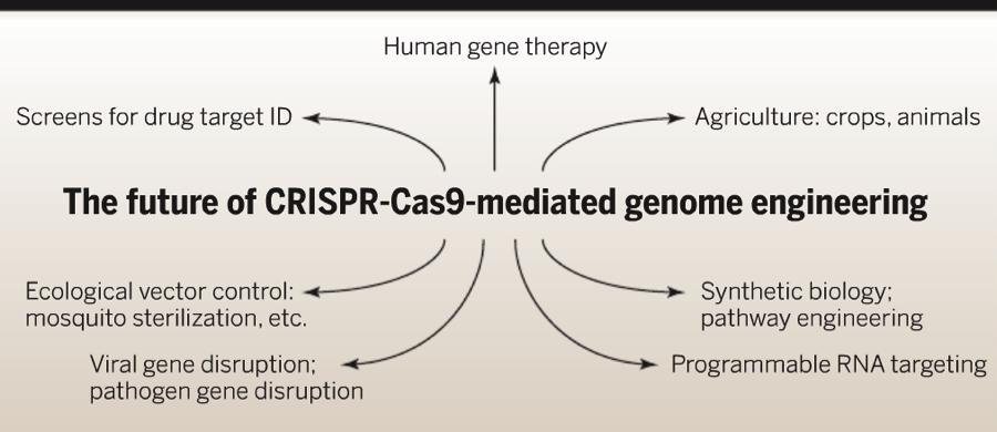 Genome3