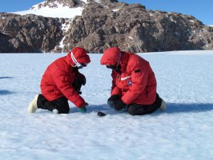 Meteorite discovered in Antarctica / Image courtesy of Antarctic Search for Meteorites Program / Katherine Joy)
