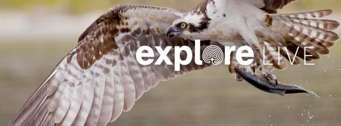 Explore Live