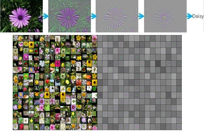 flower_rec_process