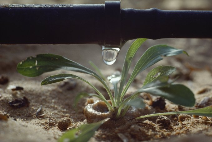 ISRAEL - OCTOBER 03: Drip irrigation rations out a precise sip of water to a flower. Netiv Ha Asara, Near Qiryat Gat, Israel. (Photo by James L. Stanfield/National Geographic/Getty Images)