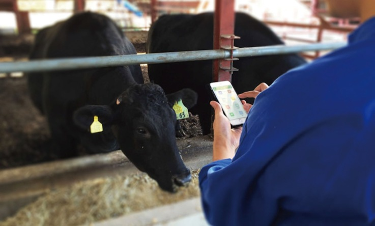 """One of Soracom's case studies is Farmnote, """"a solution that involves attaching a sensor to heads of cattle and polling data on their activity."""""""