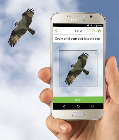 Good luck catching an osprey in flight with your Galaxy S4 though. If it were that close I'd advise ducking instead.