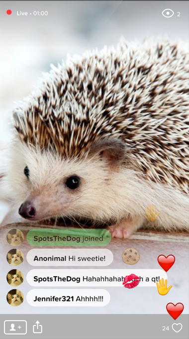 Users of the Waggle mobile app express their love of cute, baby hedgehogs.