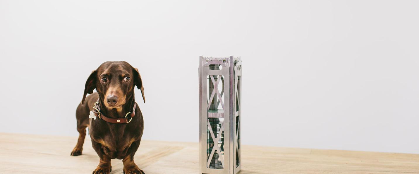 Fleet Nanosatellite dog