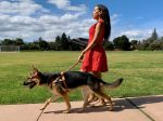 Woman walking with guide dog.